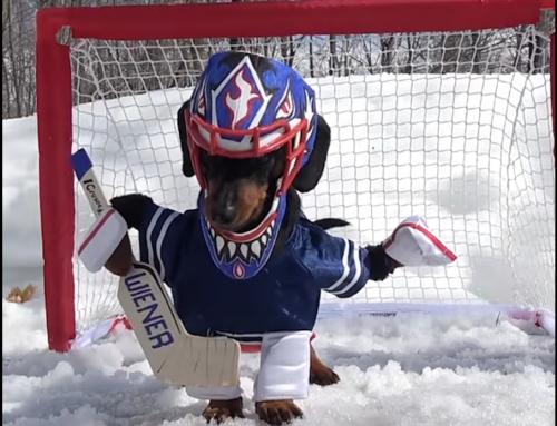 Quand un chien se prend pour un gardien de hockey sur glace